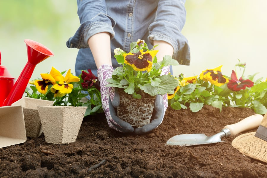 Top Ways to Have A Plastic-Free Garden