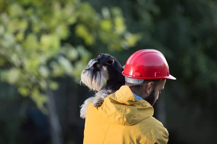Christmas Gift Ideas to Prepare Pet Owners for Emergencies