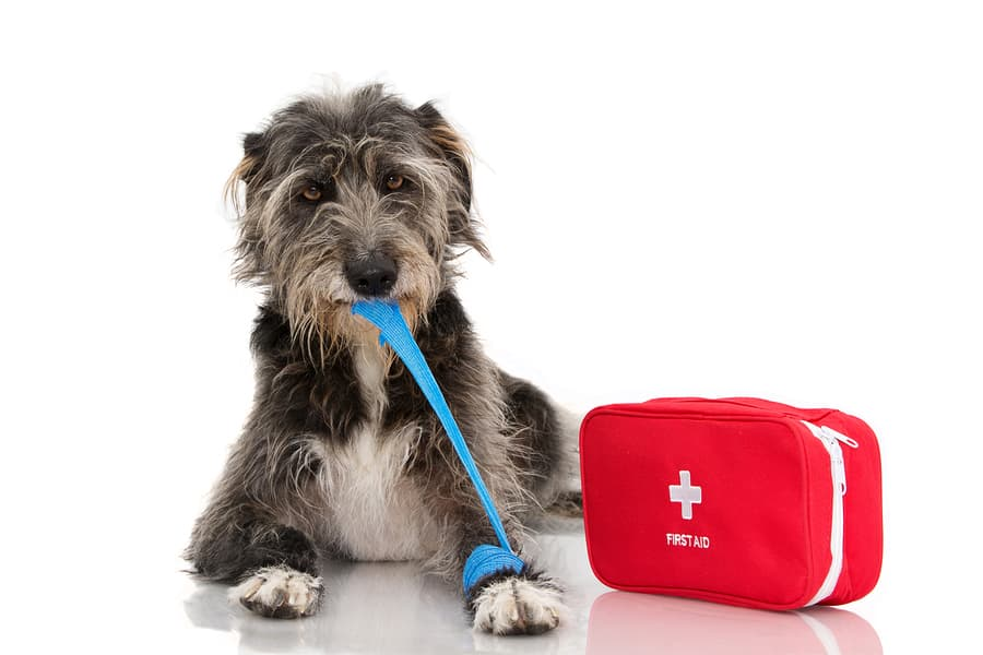 Top Pet Emergency Kit Items