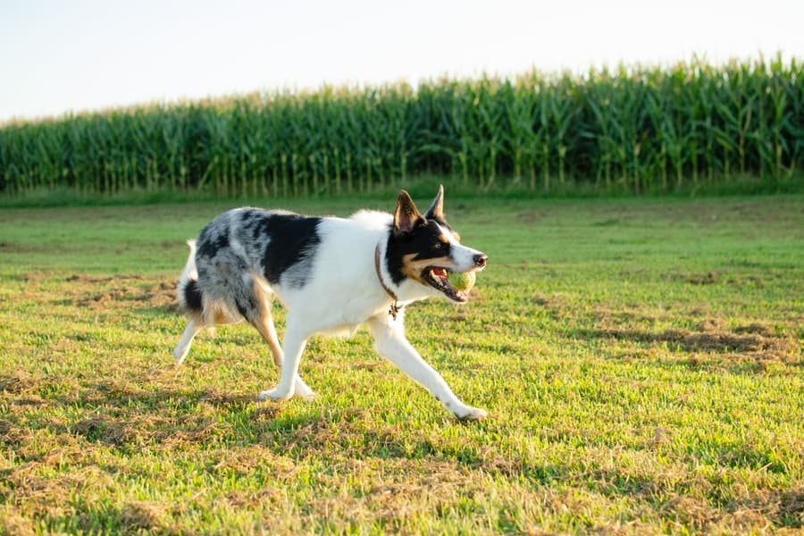 Keep Homestead Dogs Healthy with These Tips